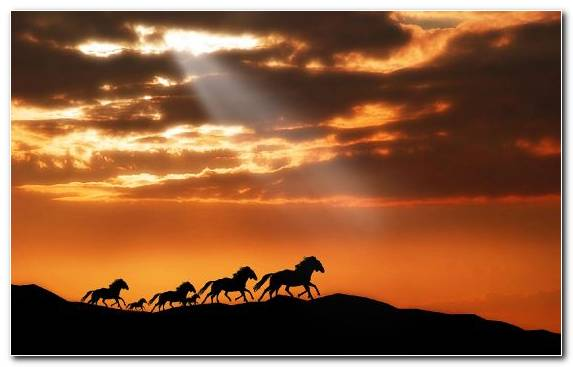 Image Cloud Arabian Horse Clouds Sky Sunset