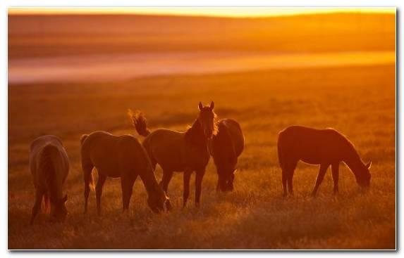 Image Cloud Horse Horses Grassland Steppe