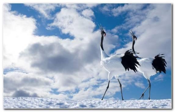 Image Cloud Sky Crane Crane Like Bird Tree