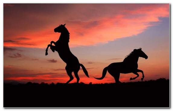 Image Clouds Andalusian Horse Friesian Horse Sky Horse Training