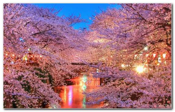 Image color blossom tourist attraction japan branch