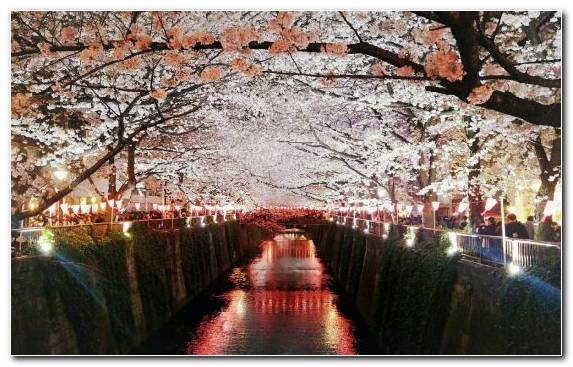 Image Color Japan Reflection Water Flower