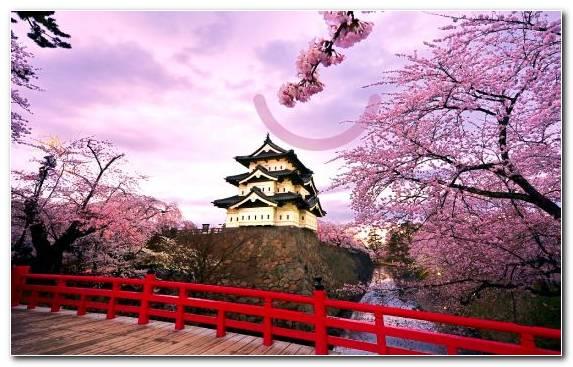 Image Color Spring Sky Flower Plant
