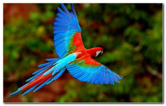 Image Common Pet Parakeet Parrot Feather Macaw Lorikeet