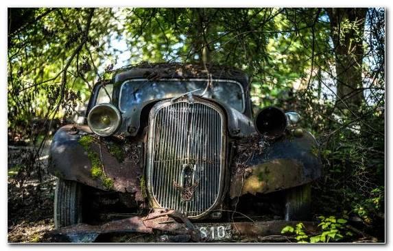 Image compact car car hot rod tree automotive exterior
