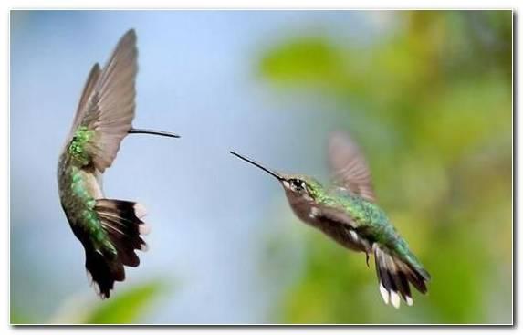 Image Coraciiformes Hummingbird Wing Pollinator Beak