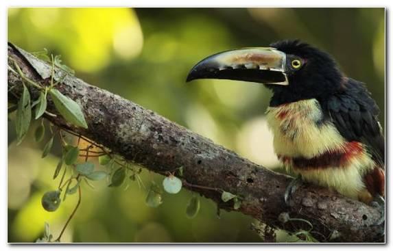 Image Coraciiformes Rhinoceros Branch Bird Animal