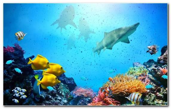 Image Coral Ocean Ecosystem Underwater Coral Reef