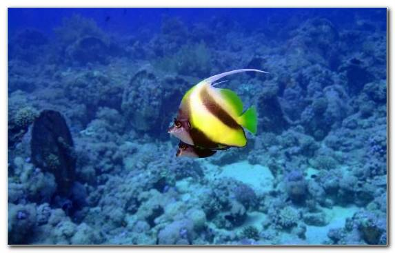Image Coral Reef Ecosystem Reef Underwater Grouper
