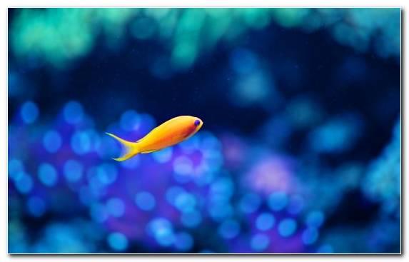 Image coral reef fish colourful fishes pomacentridae macro photography marine biology