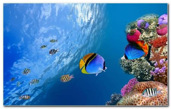 Image Coral Reef Fish Ecosystem Coral Reef Underwater Ocean
