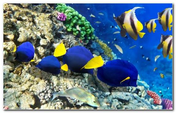 Image Coral Sea Coral Reef Fish Marine Biology Anemone Fish