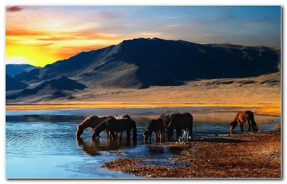 Image Cowboy Mongolian Horse Wildlife Wilderness Ecosystem