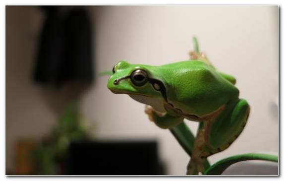 Image Crawl Fauna Macro Photography Reptile Tree Frog