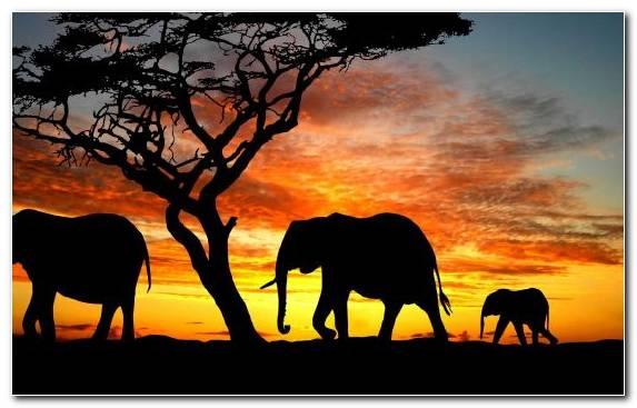 Image Creative Arts Africa Painting Grassland Elephant