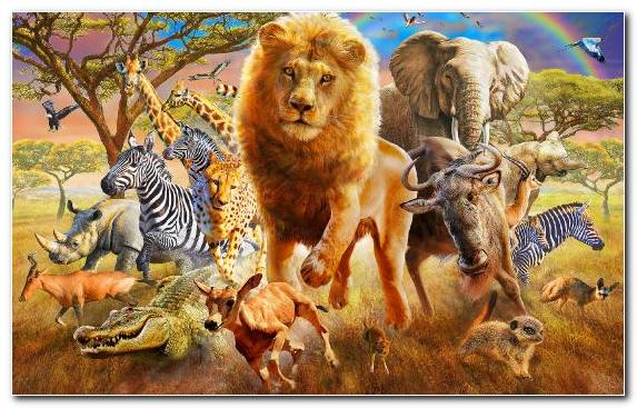 Image Creative Arts Work Of Art Artist Lion Big Cats