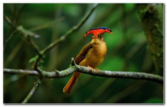 Image Crest Bird Beak Coraciiformes Wildlife