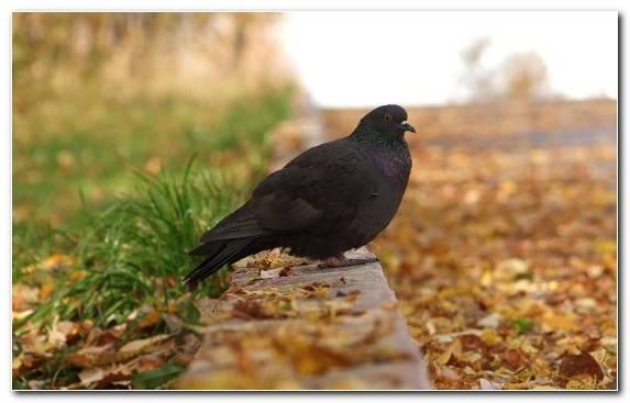 Image Crow Emberizidae Blackbird Bird Fauna