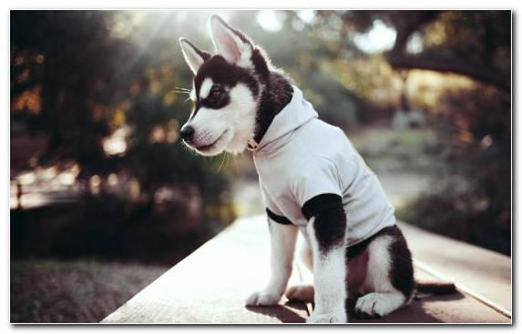 Image Cuteness Dog Breed Group Dog Breed Puppy Alaskan Malamute