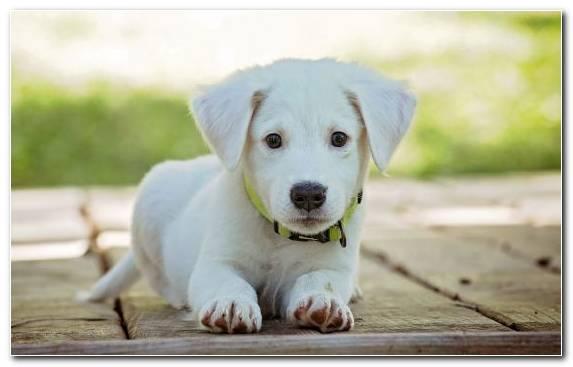 Image Cuteness French Bulldog Dog Like Mammal Cat Maltese Dog