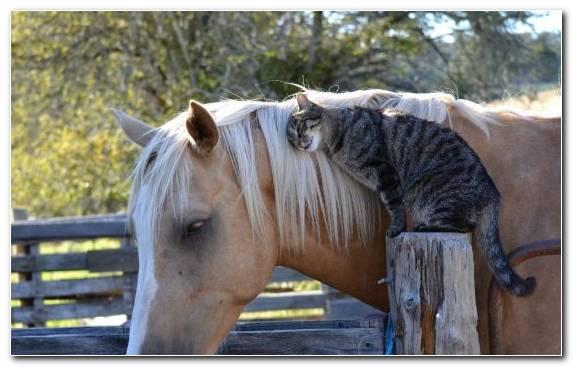 Image Cuteness Horses Tree Mare Felidae