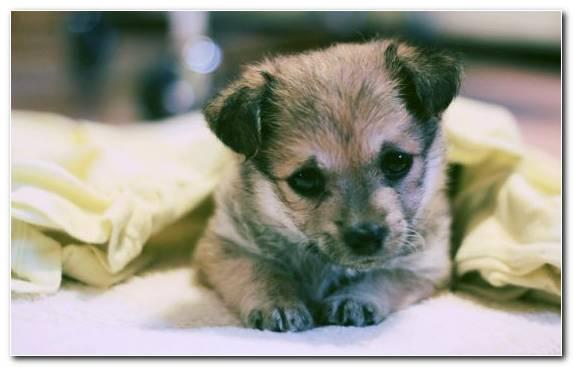 Image Cuteness Labrador Retriever Street Dog Rare Breed Dog Snout