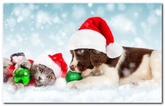 Image Cuteness Puppy Love Kitten Dog Like Mammal Dog Breed