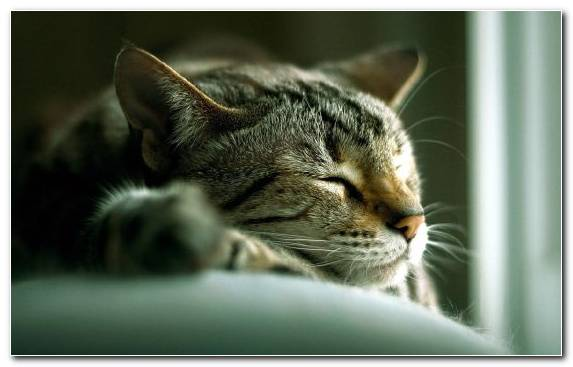 Image cuteness snout kitten fauna pet sitting