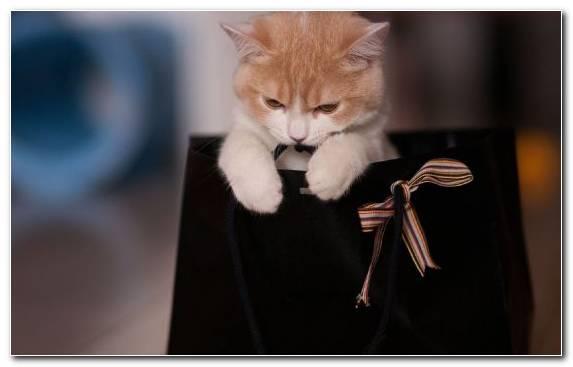 Image Cuteness Vertebrate Kitten Gift