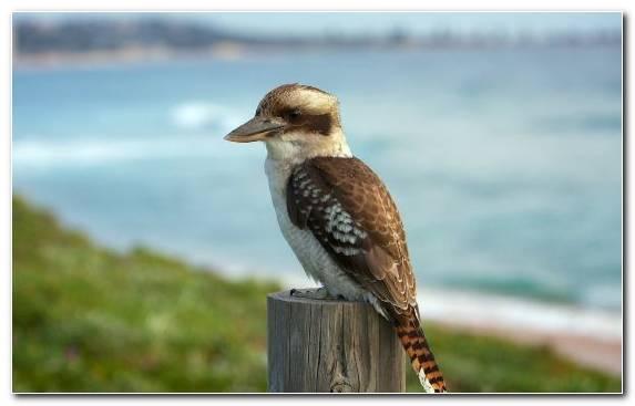 Image cygnini animal beak sky goose