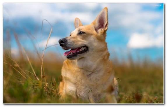 Image Dachshund Grass Grasses Dog Breed Dog