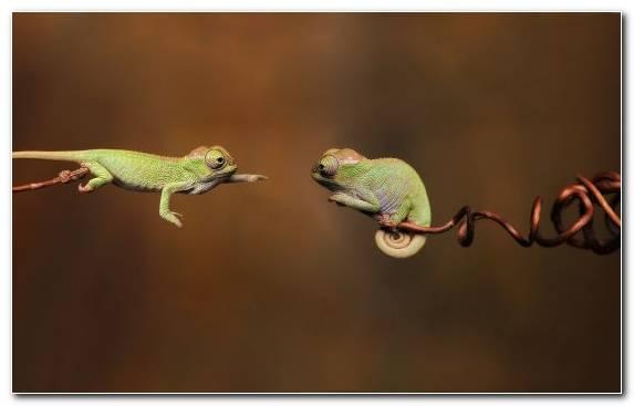 Image Dactyloidae Scaled Reptile Reptile Fauna Gecko