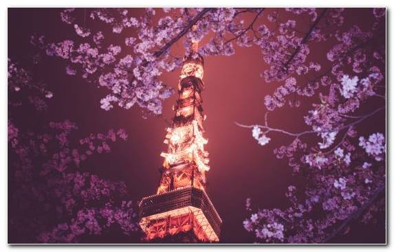 Image Darkness Cherry Blossom Flower Color Branch