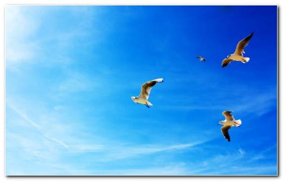 Image Day Bird Sky Animal Cloud
