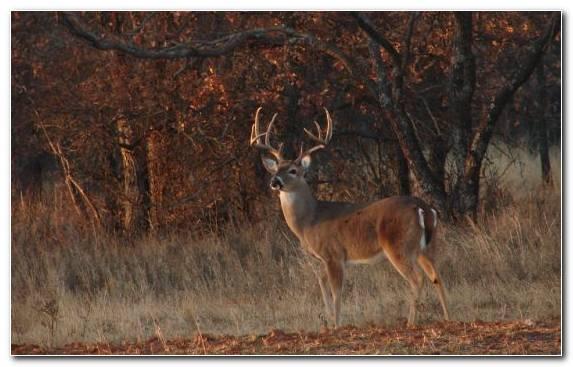 Image Deer Deer Hunting Hunting Reindeer Ecosystem