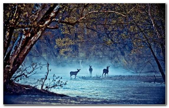 Image Deer Freezing Tree Morning Nature