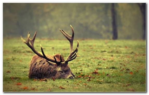 Image Deer Grass Elk Antler Wilderness