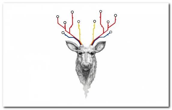 Image Deer Poster Reindeer Horn Antler