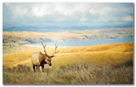 Image Deer Prairie Wildlife Sky Grazing