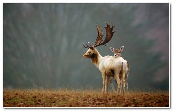Image Deer Reindeer Horse Wildlife Terrestrial Animal