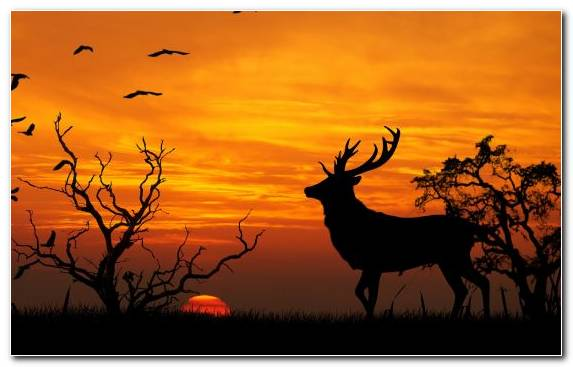 Image Deer Sky Sunset Silhouette Savanna