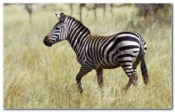 Image Desert Grasses Wildlife Ecosystem Grassland