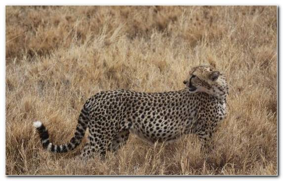 Image Desert Grassland Ecosystem Jaguar Cars Ecoregion