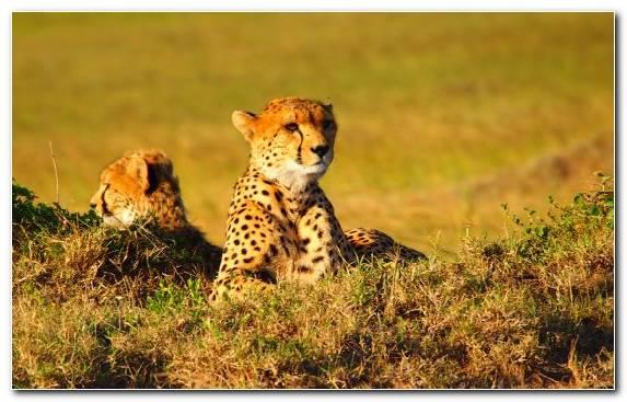 Image Desert Grassland Terrestrial Animal Travel Wilderness