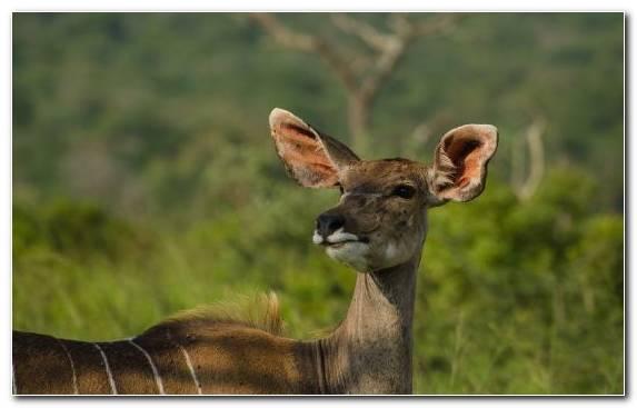 Image Desert Impala Ecosystem Antelope Nile Crocodile