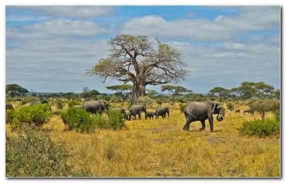 Image Desert Safari Nature Reserve Ecosystem Savanna