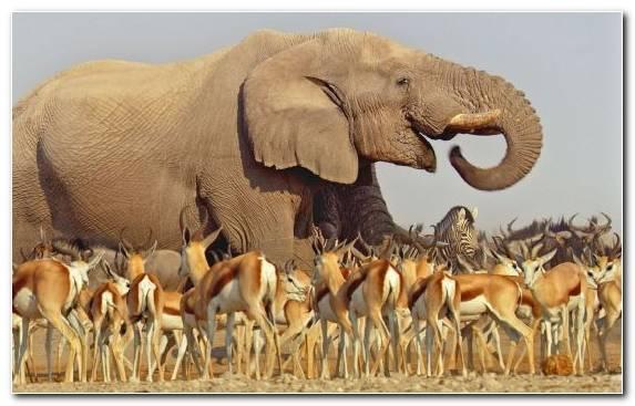 Image Desert Television African Elephant Indian Elephant Television Show