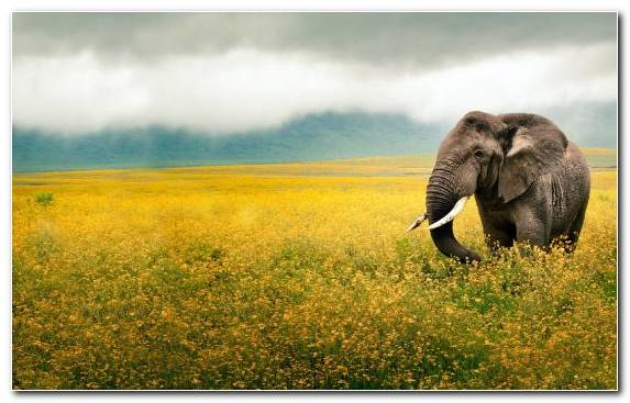 Image Desert Terrestrial Animal Grassland Nature Reserve African Elephant