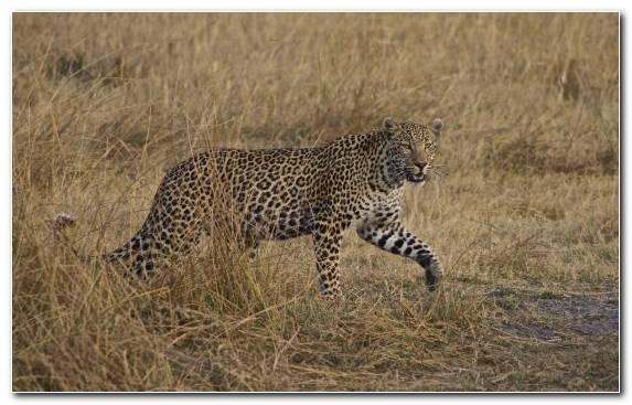 Image Desert Wildlife Terrestrial Animal Ecosystem Grassland