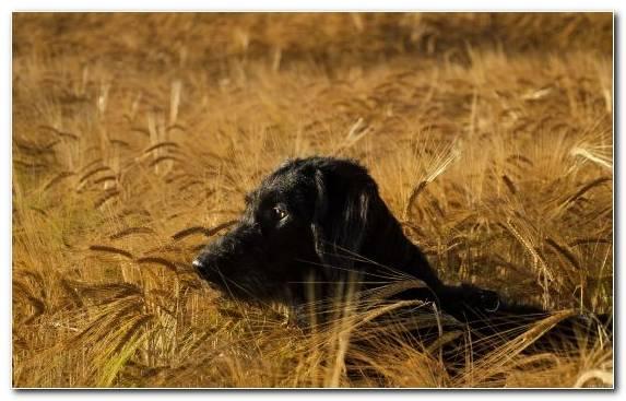 Image Detection Dog Wildlife Savanna Hunting Dog Fauna